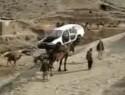 A Camel Carrying a Car