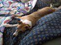 Sandy-naptime